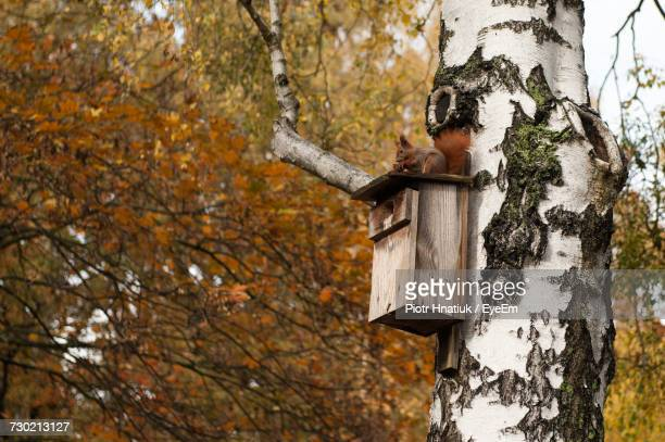 close-up of tree trunk during autumn - piotr hnatiuk imagens e fotografias de stock