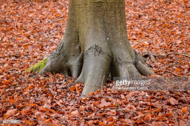close-up of tree trunk during autumn - per grunditz stock pictures, royalty-free photos & images