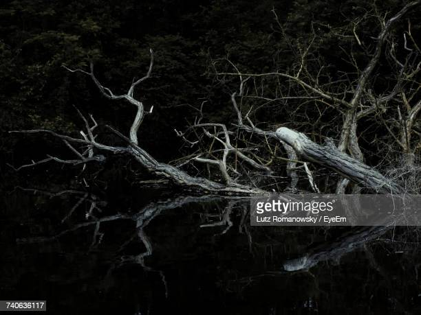 close-up of tree trunk in forest at night - tree roots stock pictures, royalty-free photos & images