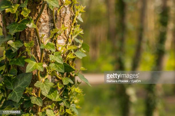 close-up of tree trunk in forest - tree trunk stock pictures, royalty-free photos & images