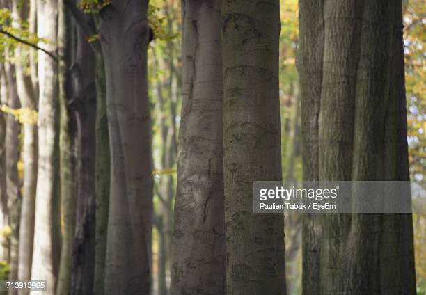 close-up of tree trunk in forest - paulien tabak foto e immagini stock