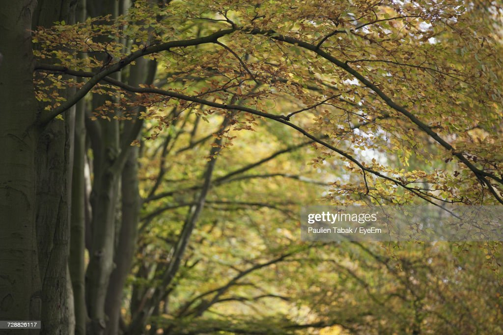 Close-Up Of Tree Trunk In Forest : Stockfoto