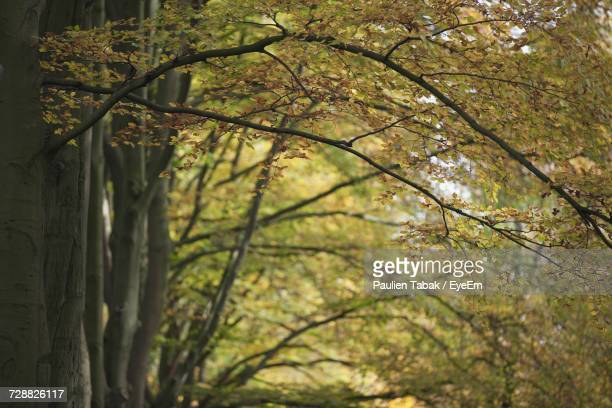 close-up of tree trunk in forest - paulien tabak stock pictures, royalty-free photos & images