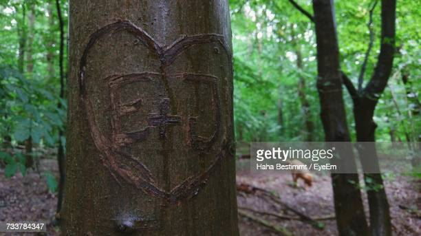 close-up of tree trunk in forest - gorgeous babes fotografías e imágenes de stock