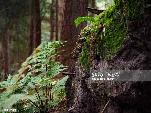 close-up of tree trunk in forest - bos stock pictures, royalty-free photos & images