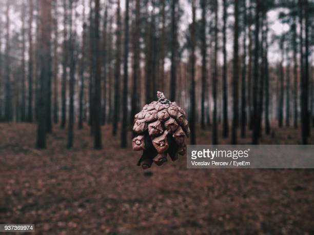 close-up of tree trunk in forest - nizhny novgorod oblast stock photos and pictures
