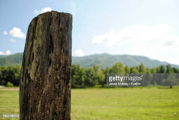 Close-Up Of Tree Trunk On Field Against Sky