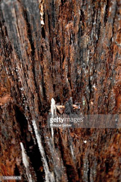 close-up of tree trunk - アメリカ大西洋岸中部 ストックフォトと画像