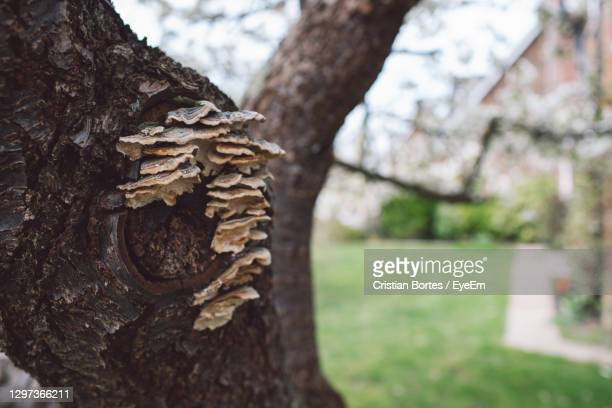 close-up of tree trunk - bortes stock pictures, royalty-free photos & images
