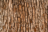 http://www.istockphoto.com/photo/closeup-of-tree-trunk-gm171298174-20792533