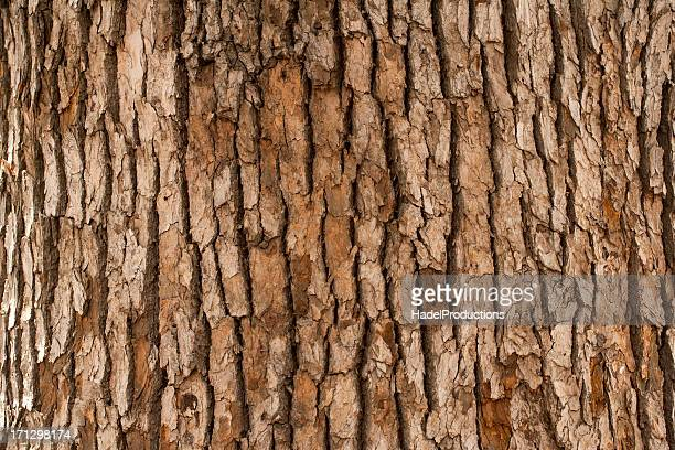 closeup of tree trunk - tree trunk stock pictures, royalty-free photos & images