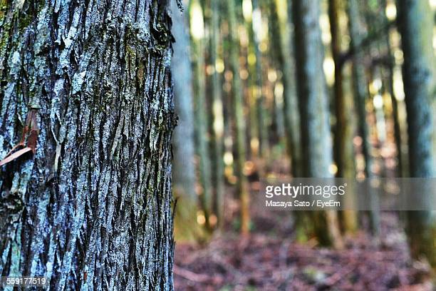 close-up of tree trunk - maebashi city stock photos and pictures
