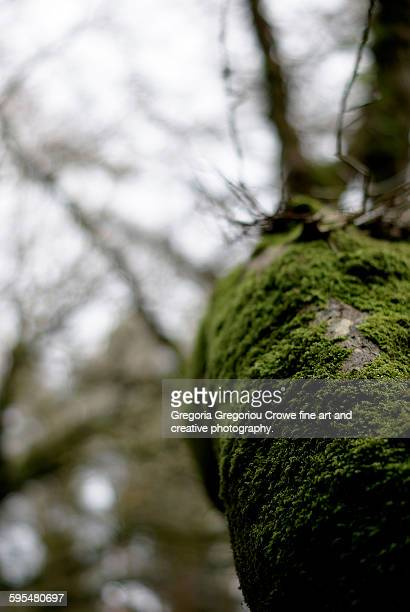 close-up of tree trunk - gregoria gregoriou crowe fine art and creative photography. stock photos and pictures