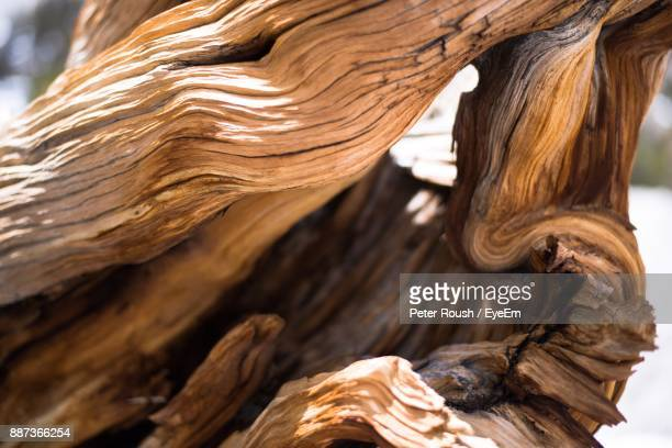 close-up of tree trunk - bark stock photos and pictures