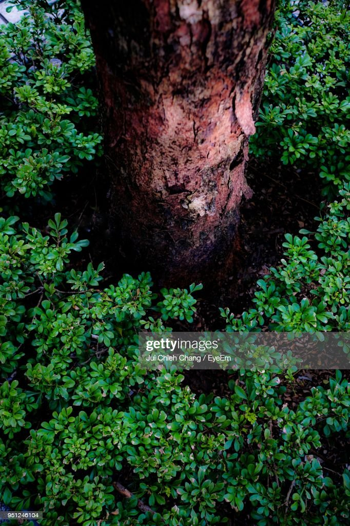 Close-Up Of Tree Trunk : Stock Photo