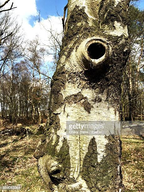 Close-Up Of Tree Trunk With Hole
