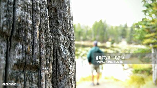 Close-Up Of Tree Trunk With Man Standing In Background