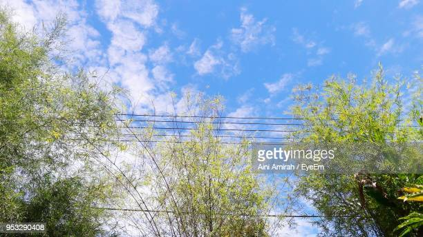 Close-Up Of Trees Against Blue Sky