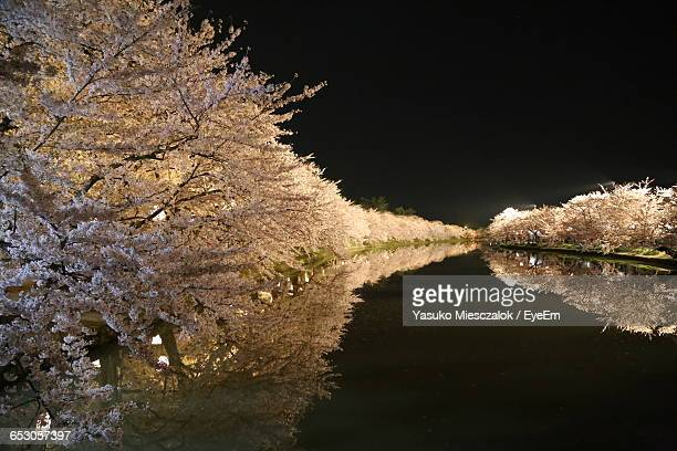 close-up of trees at night - aomori prefecture stock pictures, royalty-free photos & images