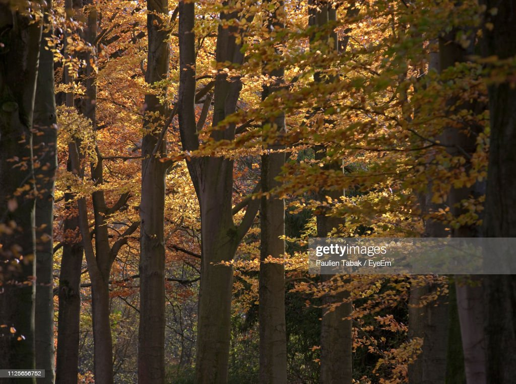 Close-Up Of Trees In Forest During Autumn : Stockfoto