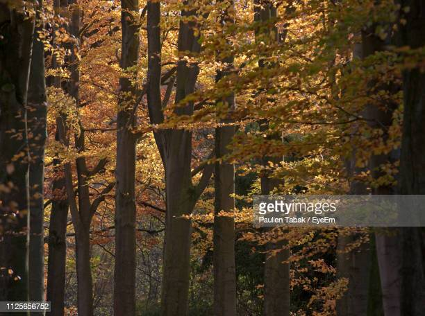 close-up of trees in forest during autumn - paulien tabak stock pictures, royalty-free photos & images