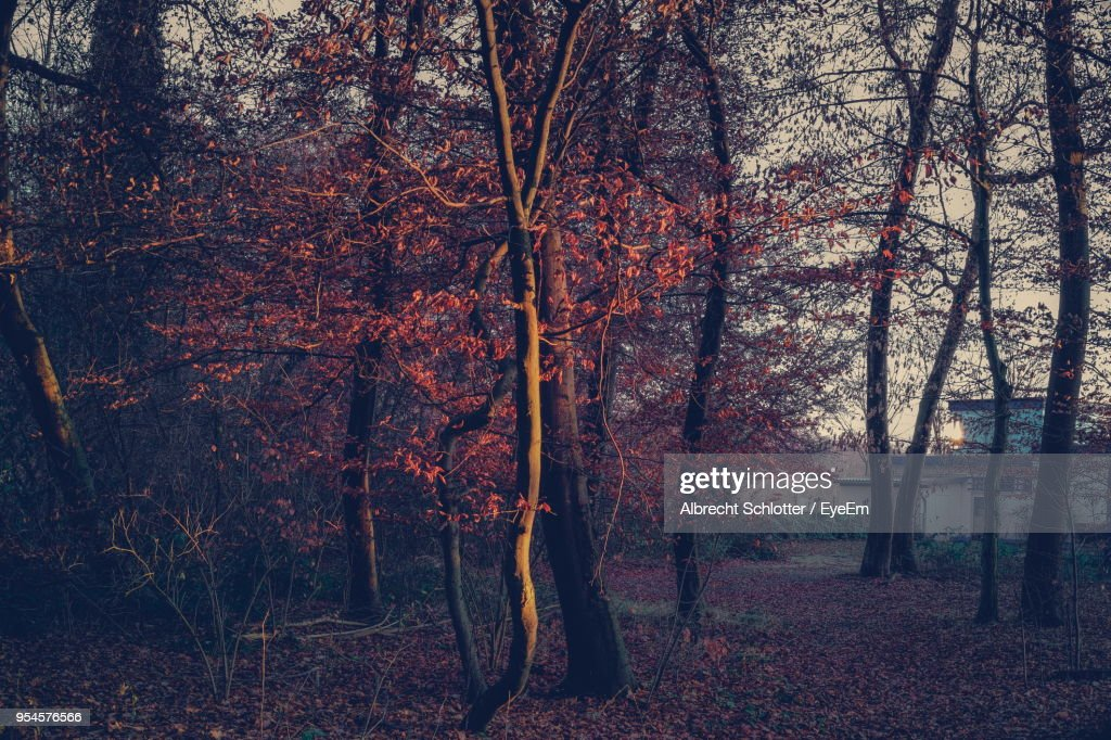 Close-Up Of Trees In Forest : Stock Photo