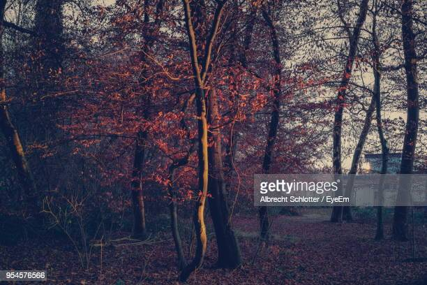 close-up of trees in forest - albrecht schlotter stock photos and pictures