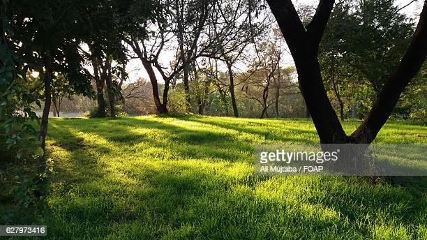 close-up of trees on green grass - イスラマバード ストックフォトと画像
