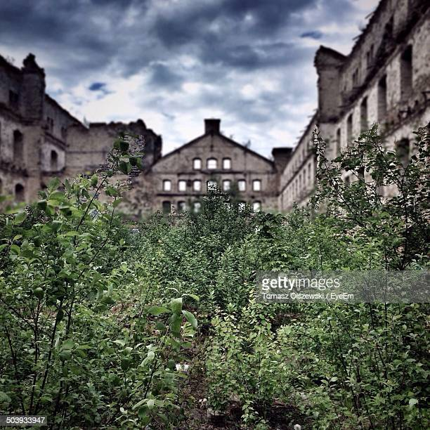 close-up of trees with buildings in background - pomorskie province stock photos and pictures