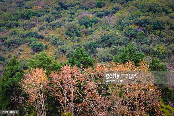 closeup of trees with orange leaves in autumn - andres ruffo stock pictures, royalty-free photos & images
