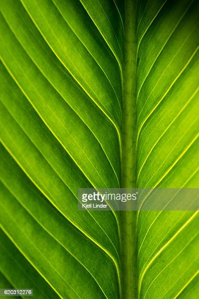 Close-up of tropical green leaf