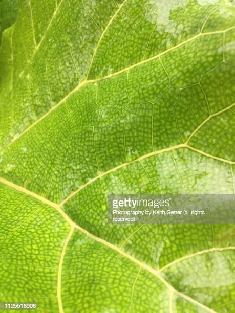 close-up of tropical leaf with green and yellow tones after a rainfall - estampa de folha - fotografias e filmes do acervo