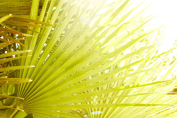 Close-up Of Tropical Palm Leaf In Sun Wall Art