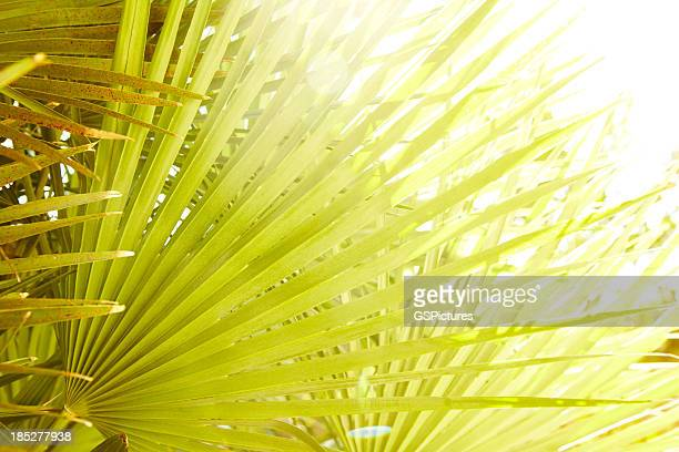 Close-up of tropical palm leaf in sun