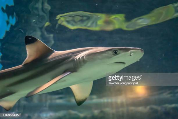 close-up of tropical shark - young animal stock pictures, royalty-free photos & images