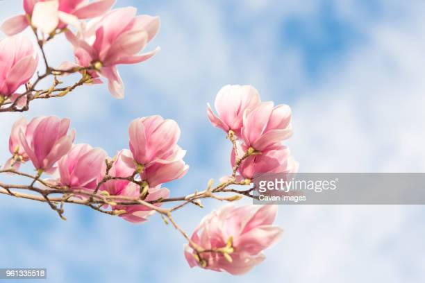 Close-up of tulip flowers on tree against sky