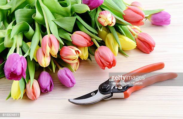 close-up of tulips and pruning shears on table - pruning shears stock photos and pictures