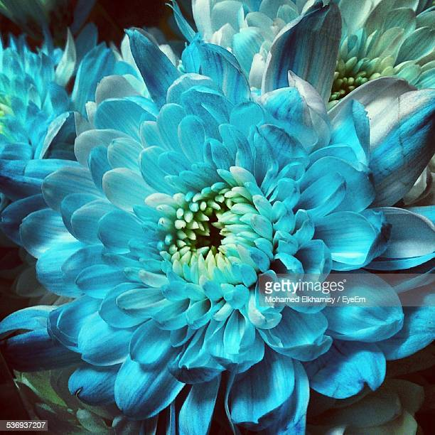 Close-Up Of Turquoise Flower Blooming Outdoors