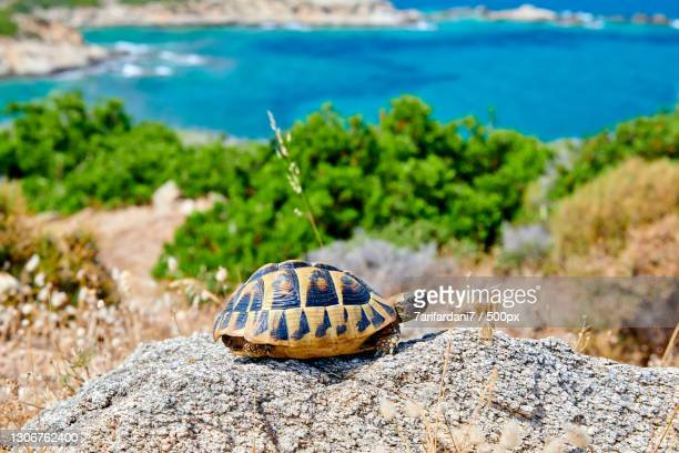 close-up of turtle on rock at beach - greece stock pictures, royalty-free photos & images