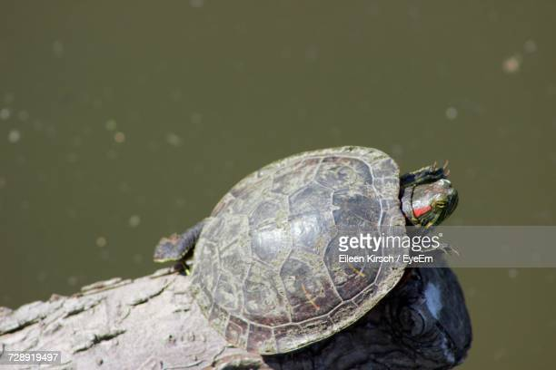 close-up of turtle - eileen kirsch stock pictures, royalty-free photos & images