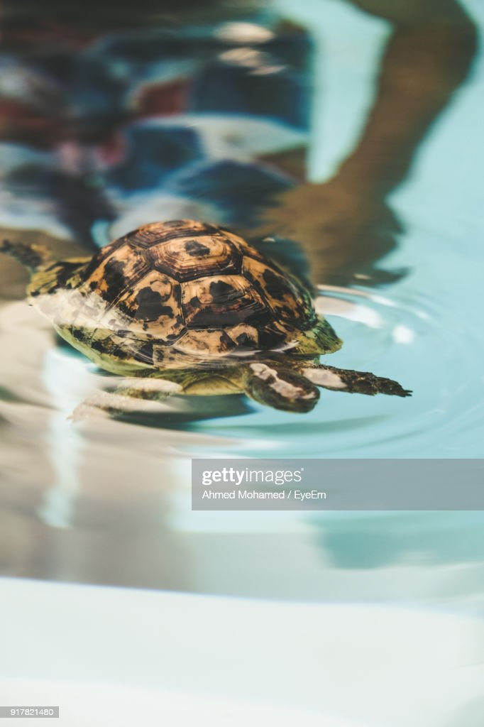 Closeup Of Turtle Swimming In Swimming Pool High-Res Stock ...