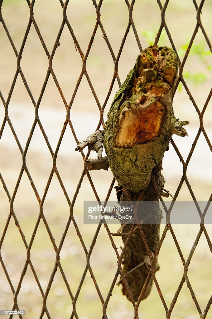 Close-Up Of Twig In Chainlink Fence : Stock Photo
