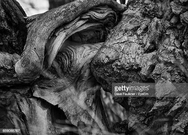 close-up of twisted tree trunk - dave faulkner eye em stock pictures, royalty-free photos & images