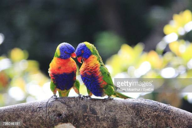 Close-Up Of Two Parrots Perching