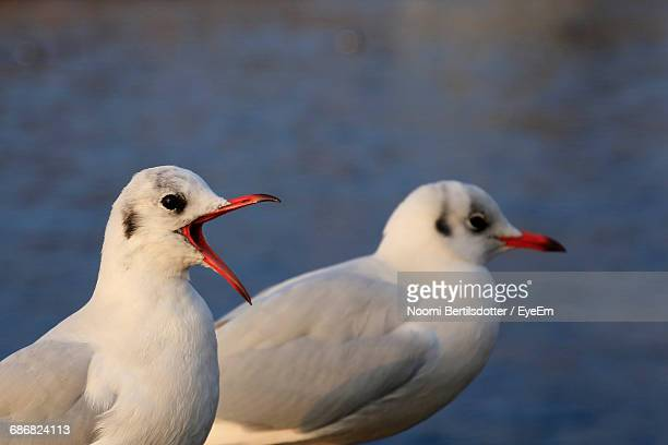 Close-Up Of Two Seagulls Against Sea