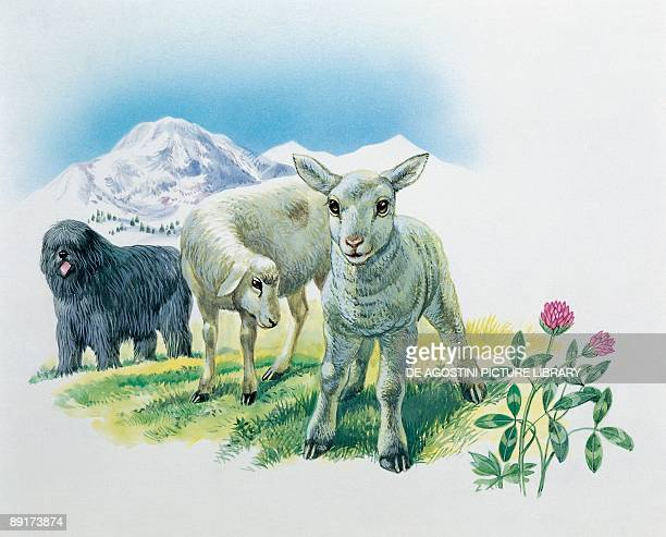 Closeup of two sheep and a lamb on a landscape