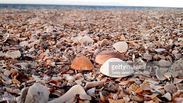 close-up of various seashells at sea shore - vero beach stock pictures, royalty-free photos & images