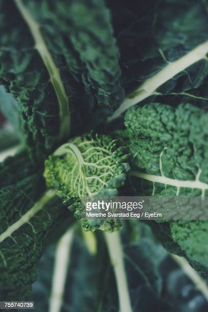 Close-Up Of Vegetables On Plant
