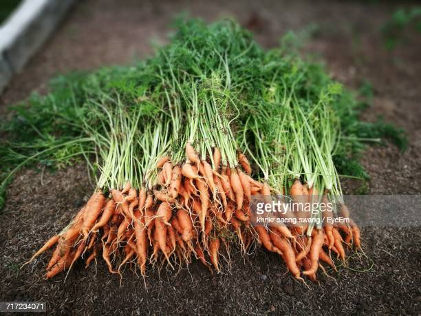 close-up of vegetables - organic farm stock pictures, royalty-free photos & images