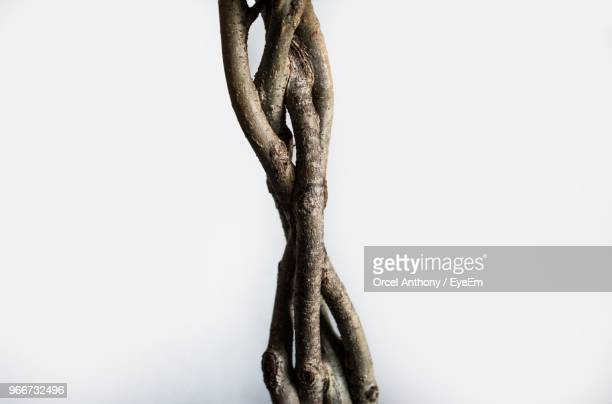 close-up of vine against white background - vine plant stock photos and pictures